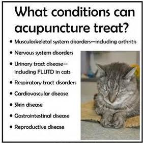 acupuncture treats these